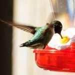Best Humming Bird Feeder