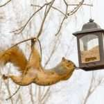 Best Squirrel Proof Bird Feeder (Keep Those Rascals Out!)
