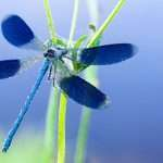What Do Dragonflies Eat? (How To Attract These Beauties)